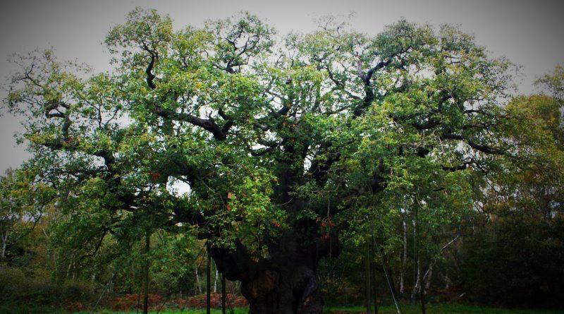 Tajemniczy las Sherwood