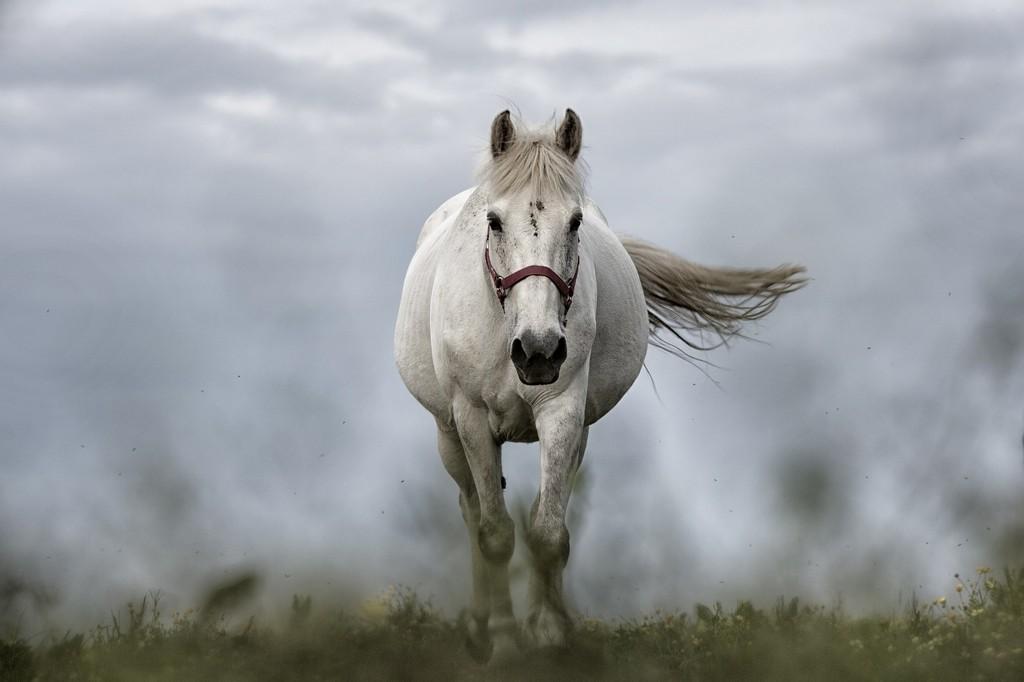 Konie Pixabay