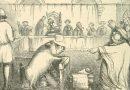 Sądy nad świniami